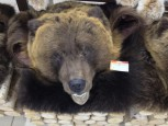 Ковер медвежий с головой №7 - купить (заказать), узнать цену - Охотничий супермаркет Стрелец г. Екатеринбург
