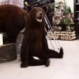 Чучело Медвежонка сидячего большой - купить (заказать), узнать цену - Охотничий супермаркет Стрелец г. Екатеринбург