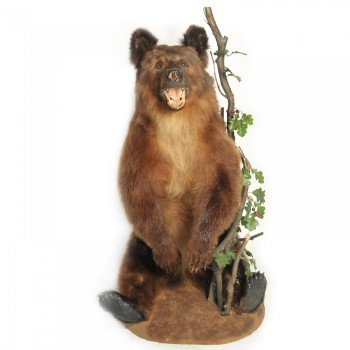 Чучело медвежонка сидячего (реал) - купить (заказать), узнать цену - Охотничий супермаркет Стрелец г. Екатеринбург
