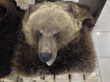 Ковер медвежий с головой №6 - купить (заказать), узнать цену - Охотничий супермаркет Стрелец г. Екатеринбург
