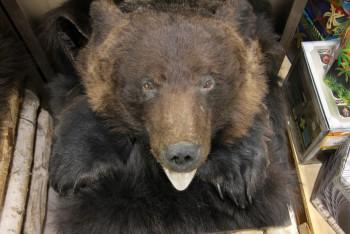 Ковер медвежий с головой №8 - купить (заказать), узнать цену - Охотничий супермаркет Стрелец г. Екатеринбург