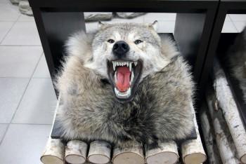 Ковер Волчий  №1 - купить (заказать), узнать цену - Охотничий супермаркет Стрелец г. Екатеринбург