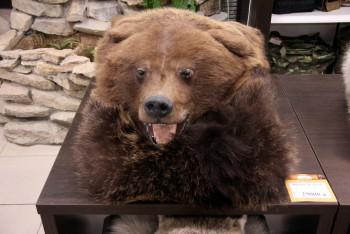 Шкура Медведя - купить (заказать), узнать цену - Охотничий супермаркет Стрелец г. Екатеринбург