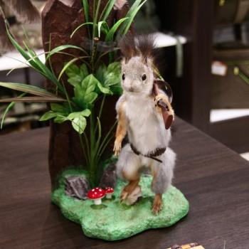 Чучело Белка охотник на полянке - купить (заказать), узнать цену - Охотничий супермаркет Стрелец г. Екатеринбург