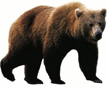 МЕДВЕДЬ - купить (заказать), узнать цену - Охотничий супермаркет Стрелец г. Екатеринбург