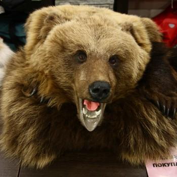 Ковер медвежий с головой №1 - купить (заказать), узнать цену - Охотничий супермаркет Стрелец г. Екатеринбург