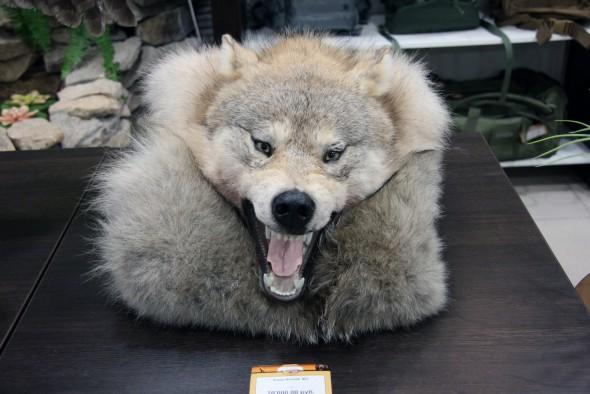 Ковер Волчий  №2 - купить (заказать), узнать цену - Охотничий супермаркет Стрелец г. Екатеринбург