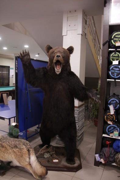 Чучело Медведя в полный рост большой - купить (заказать), узнать цену - Охотничий супермаркет Стрелец г. Екатеринбург