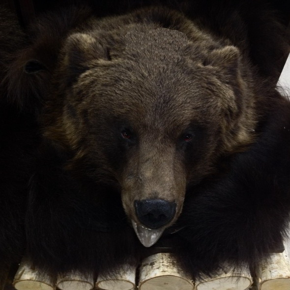 Ковер медвежий с головой №3 - купить (заказать), узнать цену - Охотничий супермаркет Стрелец г. Екатеринбург