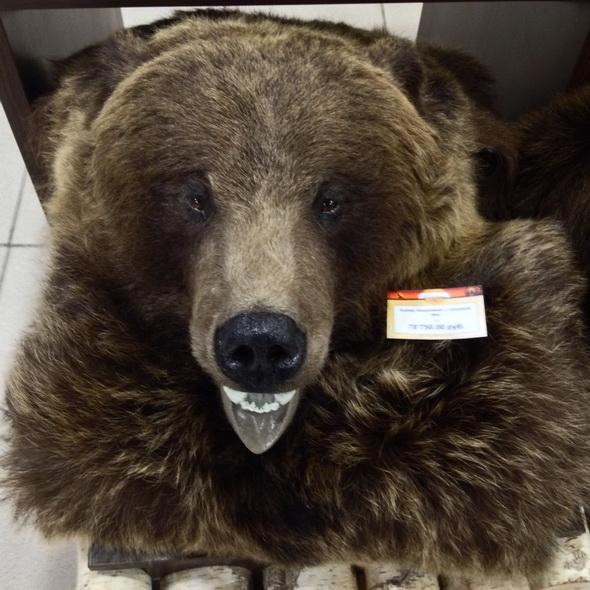 Ковер медвежий с головой №4 - купить (заказать), узнать цену - Охотничий супермаркет Стрелец г. Екатеринбург