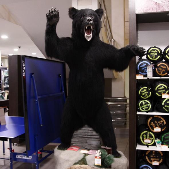 Чучело Медведя крупного на камне - купить (заказать), узнать цену - Охотничий супермаркет Стрелец г. Екатеринбург